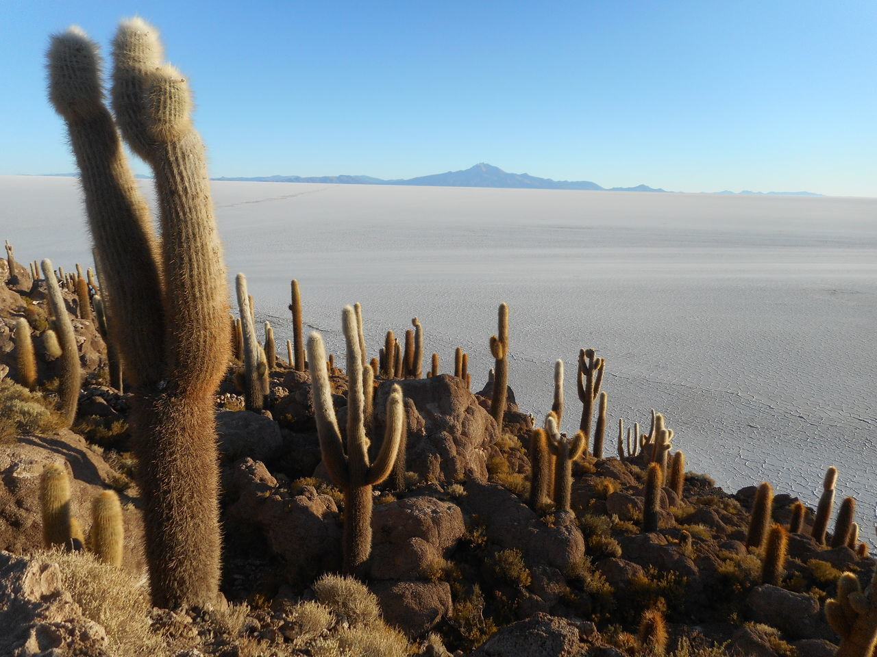 Arid Climate Beauty In Nature Blue Cactus Clear Sky Day Desert Growth Landscape Nature No People Outdoors Plant Salt Flat Sand Scenics Sky Succulent Plant Surreal Landscapes Tranquil Scene