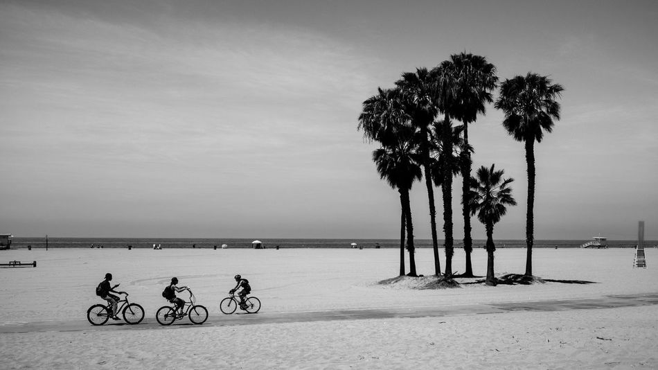 Beautiful stock photos of palm tree, Beach, Bicycle, Copy Space, Cycling