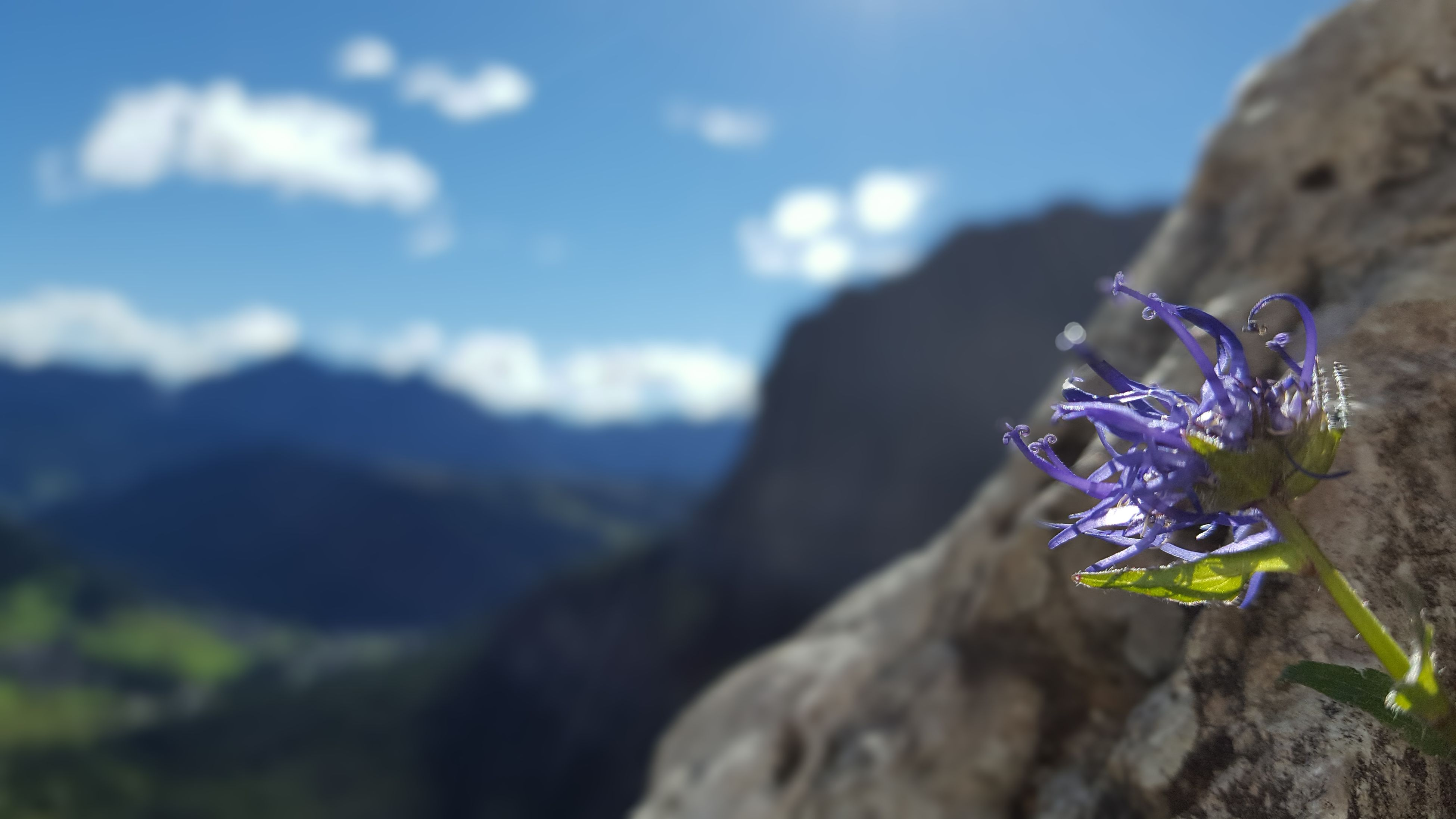 flower, nature, beauty in nature, fragility, outdoors, no people, focus on foreground, day, petal, close-up, plant, freshness, mountain, flower head, sky