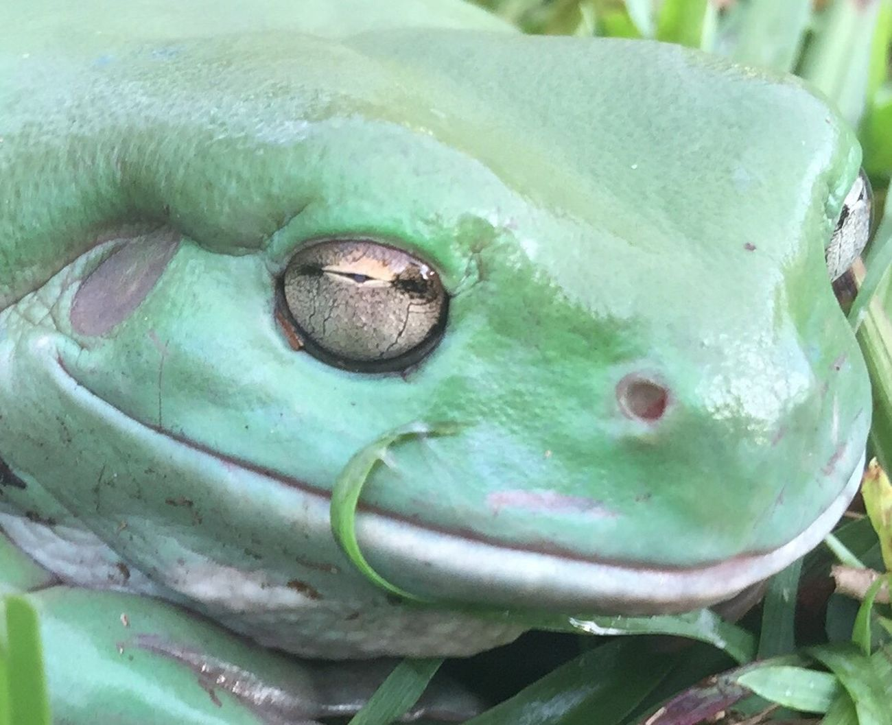 Green Color Close-up Reptile Outdoors Upclose And Personal Frog Enjoying Life Eye4photography