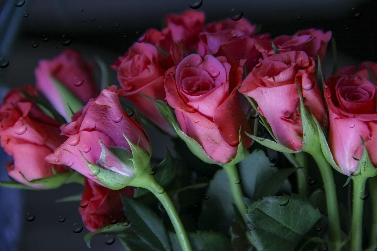 Flowers Flower Photography Flower#garden#nature#ecuador#santodomingoecuador#eyeEmfollowers#iphoneonly#nofiltrer#macro_garden#pretty#beautiful#followme#sho Roses🌹