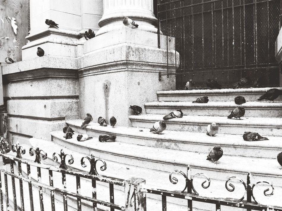 Capa Filter Black & White Downtown Pidgeons