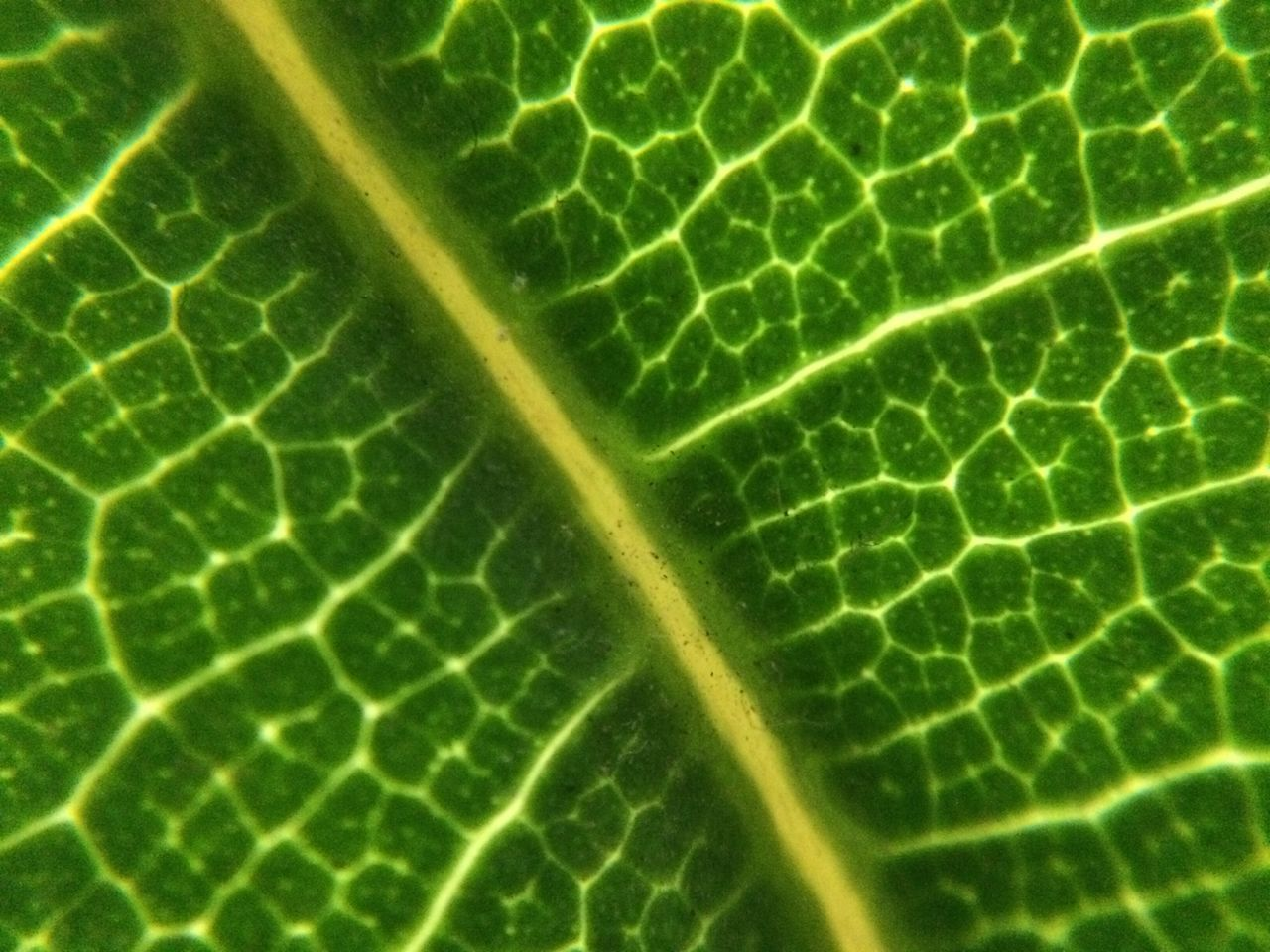 leaf, green color, close-up, pattern, backgrounds, freshness, full frame, no people, textured, food, fragility, day, nature, water, outdoors