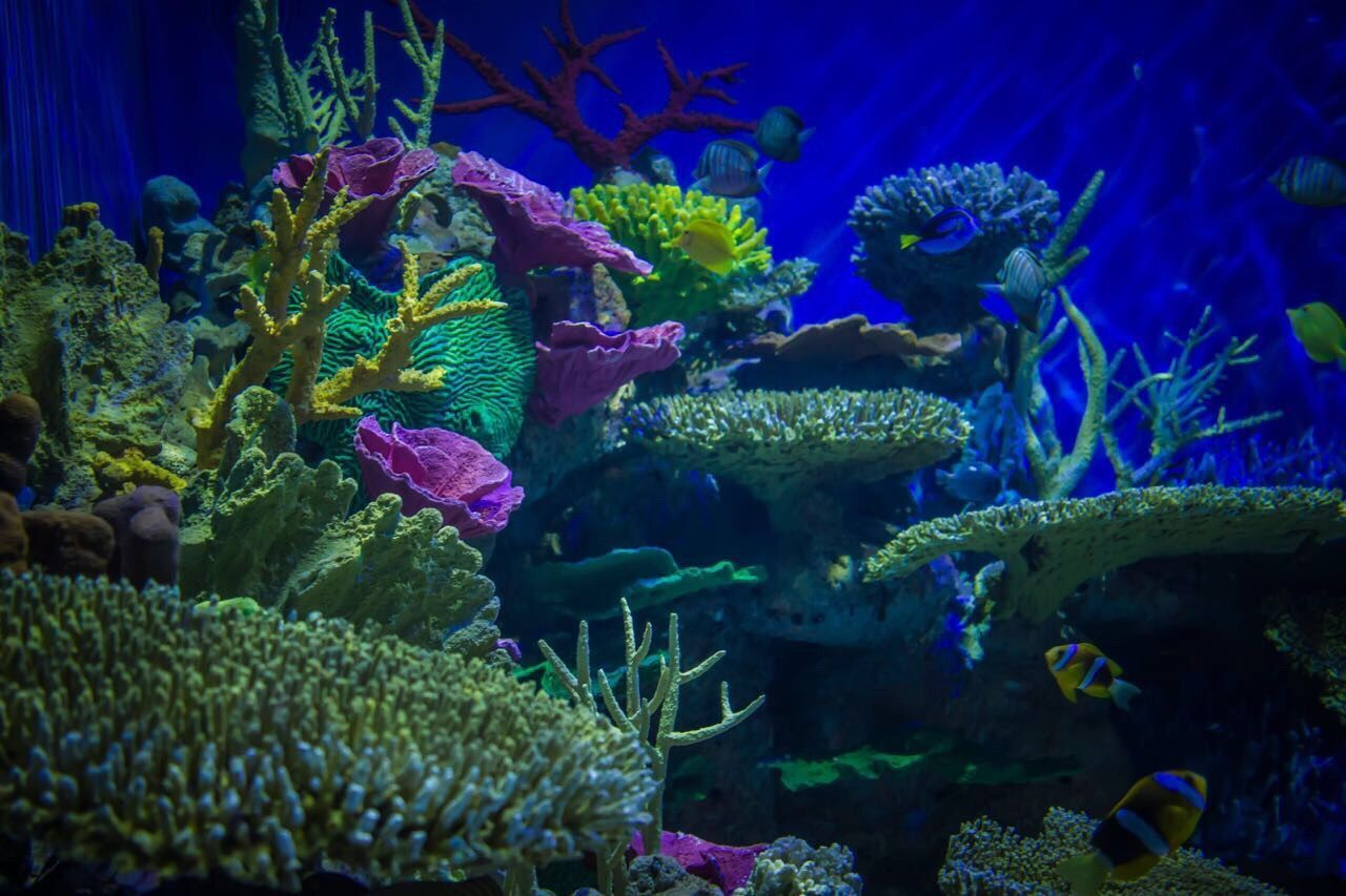 Underwater Coral Sea Life UnderSea Sea Blue Water Multi Colored Beauty In Nature Animal Themes Nature Aquarium Tropical Climate Animals In The Wild Swimming No People Ecosystem  Day