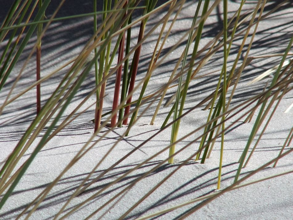 Marram Grass The Essence Of Summer In The Dunes Dunes Light And Shadow Lines And Shapes Lines In Sand Lines In Nature Sandy Sand Dunes Sand Sands Fine Art Showcase June Fine Art Photography Maximum Closeness Light And Reflection