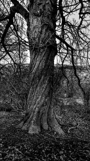 For The Love Of Black And White TreePorn Twisted Twisted Tree Check This Out Nature Photography Tree_collection  What Makes You Different For My Friends That Connect Twisting Up Odd Odd But Beautiful