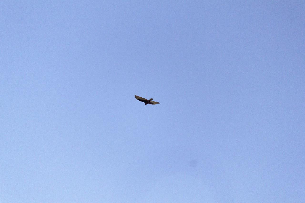 Bird Clear Downtown JacksonvilleFL Sky