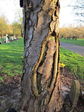 Bark Bark Texture Cemetary Close-up Graves Rough Texture Tree Tree Trunk