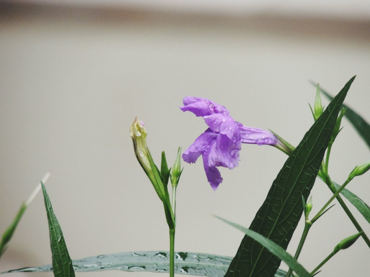 growth, nature, flower, beauty in nature, purple, plant, no people, petal, fragility, close-up, freshness, outdoors, water, day, flower head