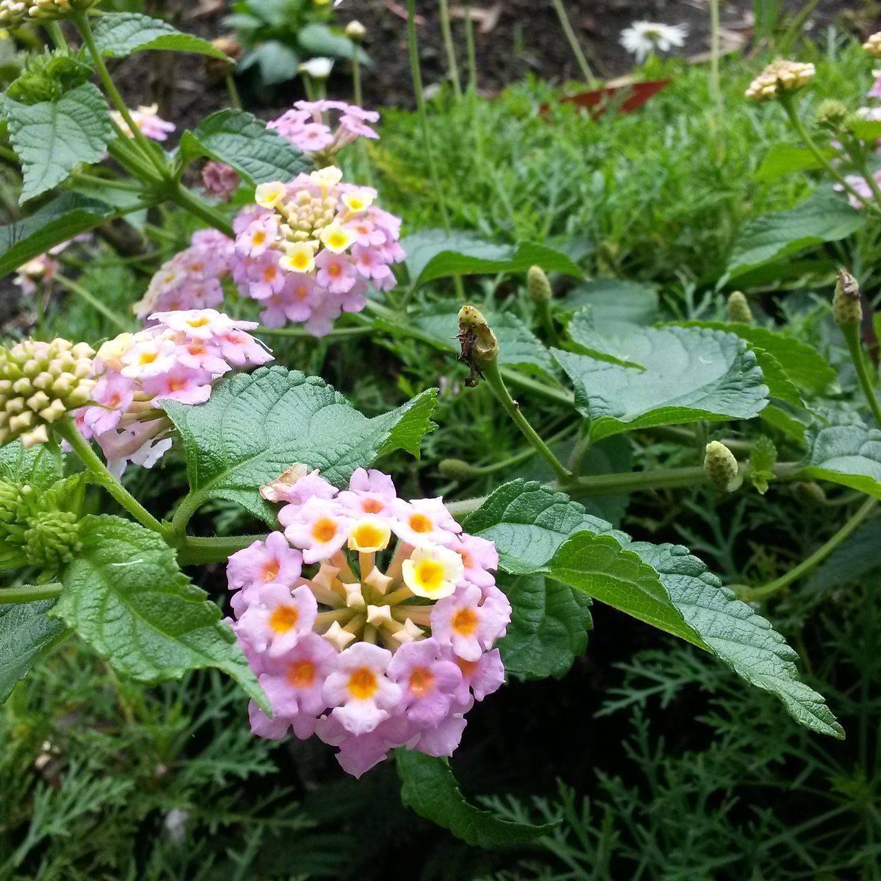 Flowers Flower Freshness Nature Plant Beauty In Nature Flower Head Green Color No People