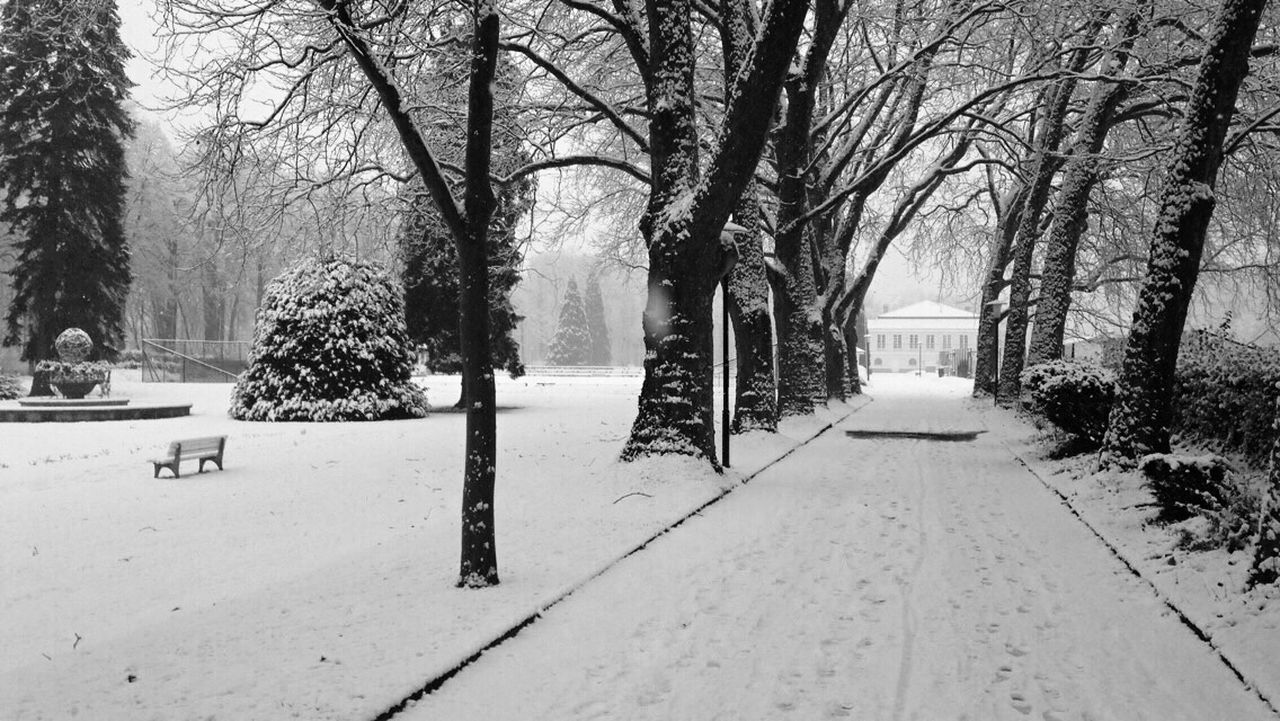 snow, winter, cold temperature, tree, bare tree, nature, weather, tranquility, the way forward, outdoors, day, tranquil scene, no people, beauty in nature, scenics, landscape