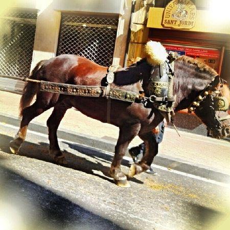 3tombs Horses Horse Horsesofinstagram Tagsforlikes Horseshow Horseshoe Horses_of_instagram Horsestagram Instahorses Wild Mane Instagood Grass Field Farm Nature Pony Ponies Ilovemyhorse Babyhorse Beautiful Pretty Photooftheday Gallop Jockey rider riders riding