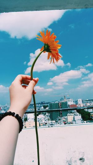 My flower day Flowers Flower Collection Orange Color Orange EyeEm Nature Lover EyeEm Matte OpenEdit Vscocam Pastel Photography Picoftheday Hochiminhcity Close-up Rooftop Sky And Clouds EyeEmNewHere