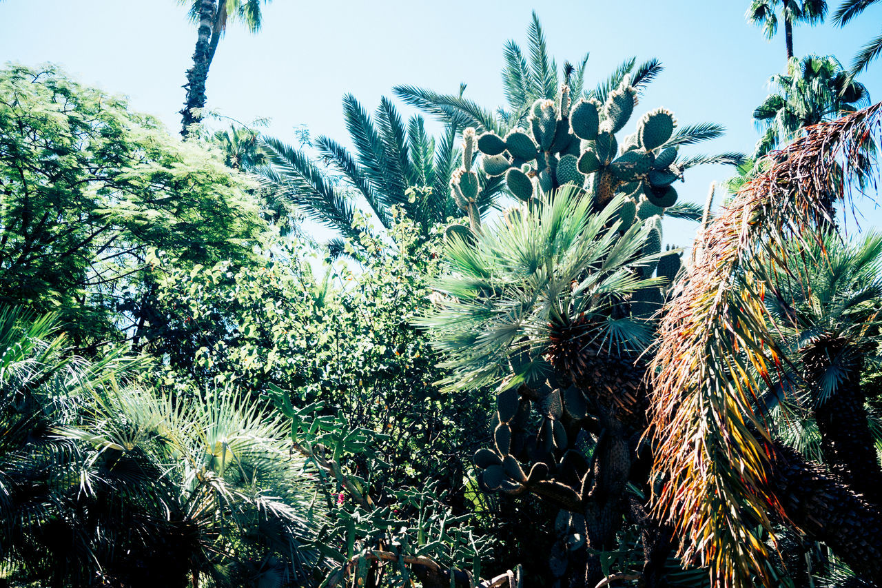 Botanical Botanical Gardens Green Green Varation Leaves Marrakesh Moroccan Green Nature Plants Summery Variety Of Green Variety Of Leaves Vigorous