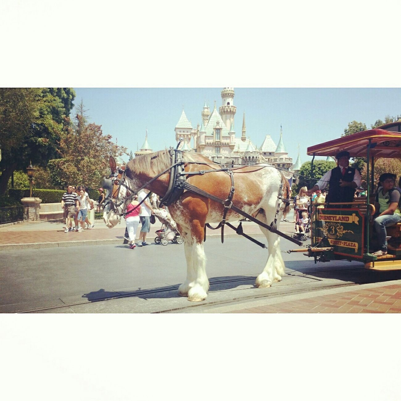 Beautifulhorse Disneyland! <3