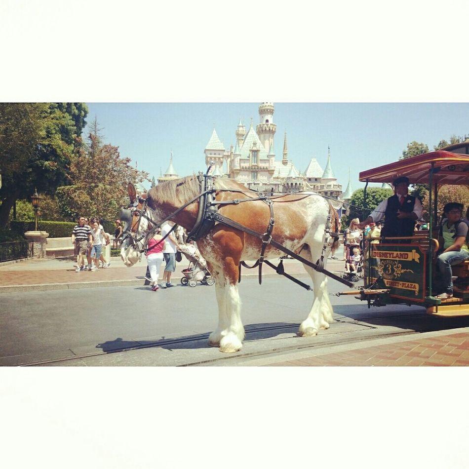 Beautifulhorse Disneyland! <3
