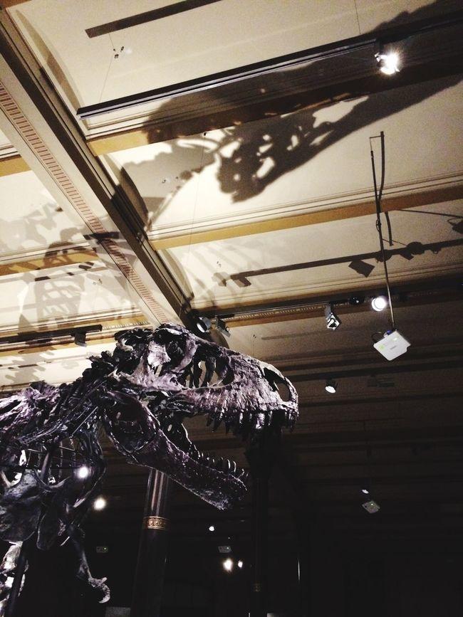 Mr. T Dinosaur TRex