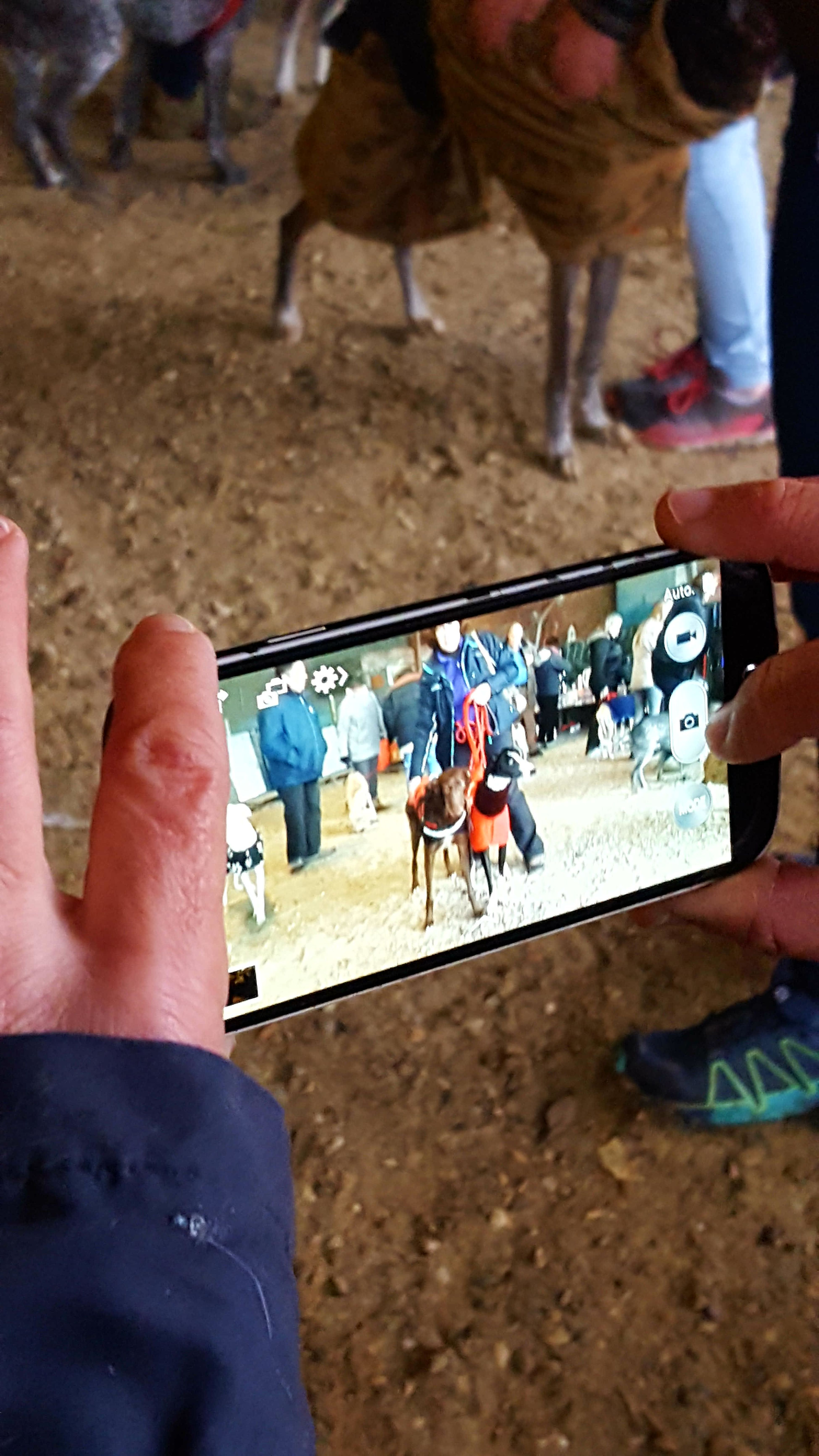 Holding Human Hand Adults Only Human Body Part Women Outdoors Adult People Men Close-up Real People Day City Technology Only Men Beach Low Section Animal Body Part Galgo France Pet Association Pets Dog My Year My View