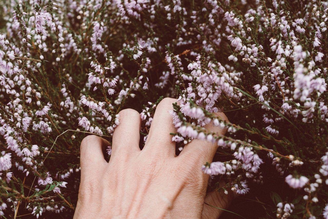 Memorie estive The Week Of Eyeem beauty in Nature flower human body part Nature Freshness flower head