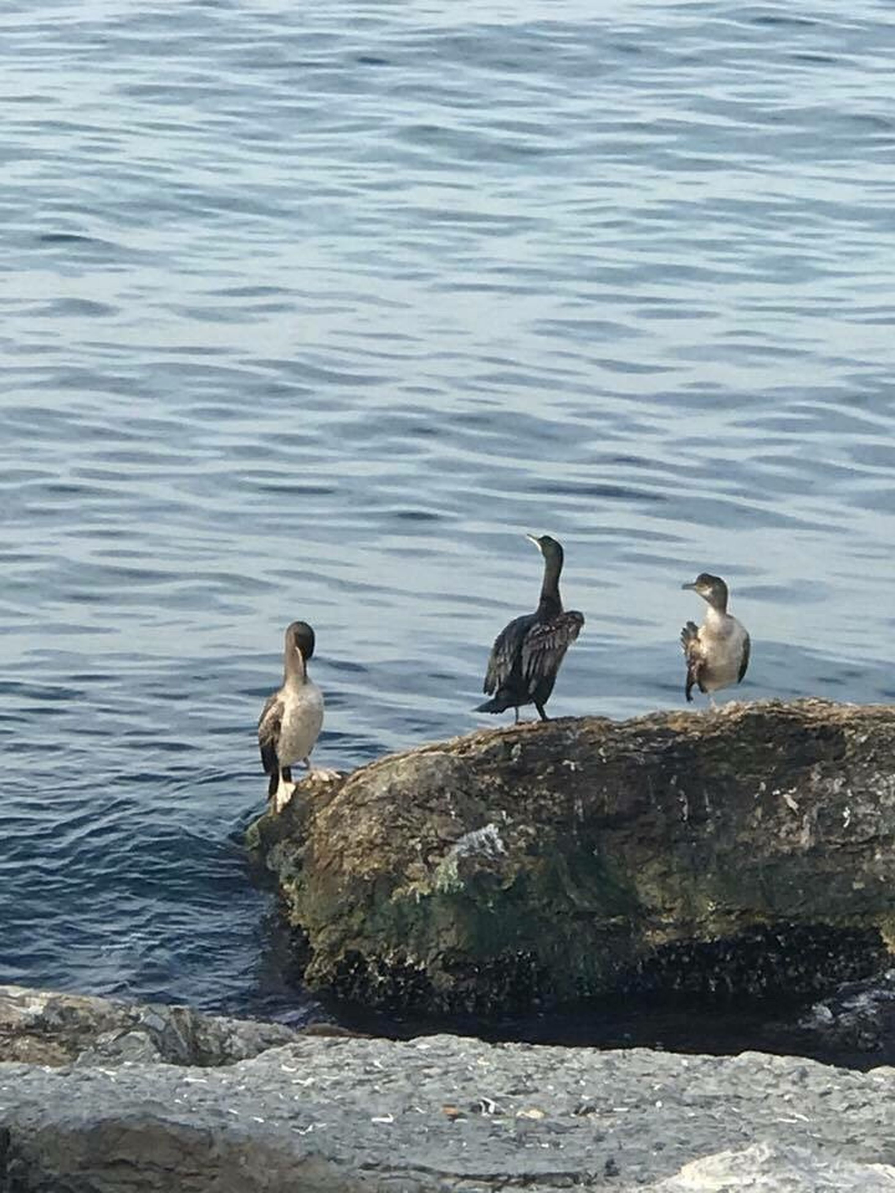 bird, animals in the wild, animal wildlife, animal themes, no people, water, outdoors, day