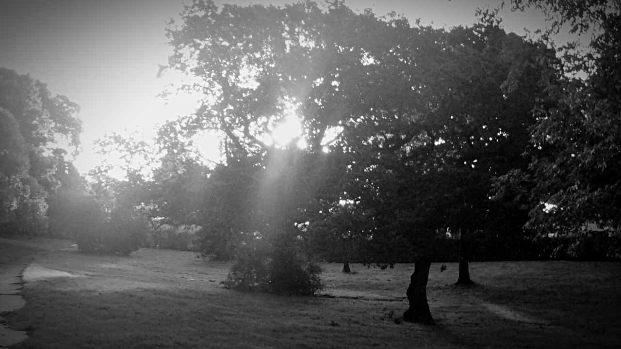 Monochrome Photography No People Blackandwhite Countryside Autumn Lomography Lomo Leaf Tree Trees And Bushes Back Lit Trees And Sky Tranquil Scene Tranquility Landscape Growth Nature Scenics Tree Trunk Beauty In Nature Sunbeam Solitude Field Branch Non-urban Scene Remote Day Outdoors Sun Sky