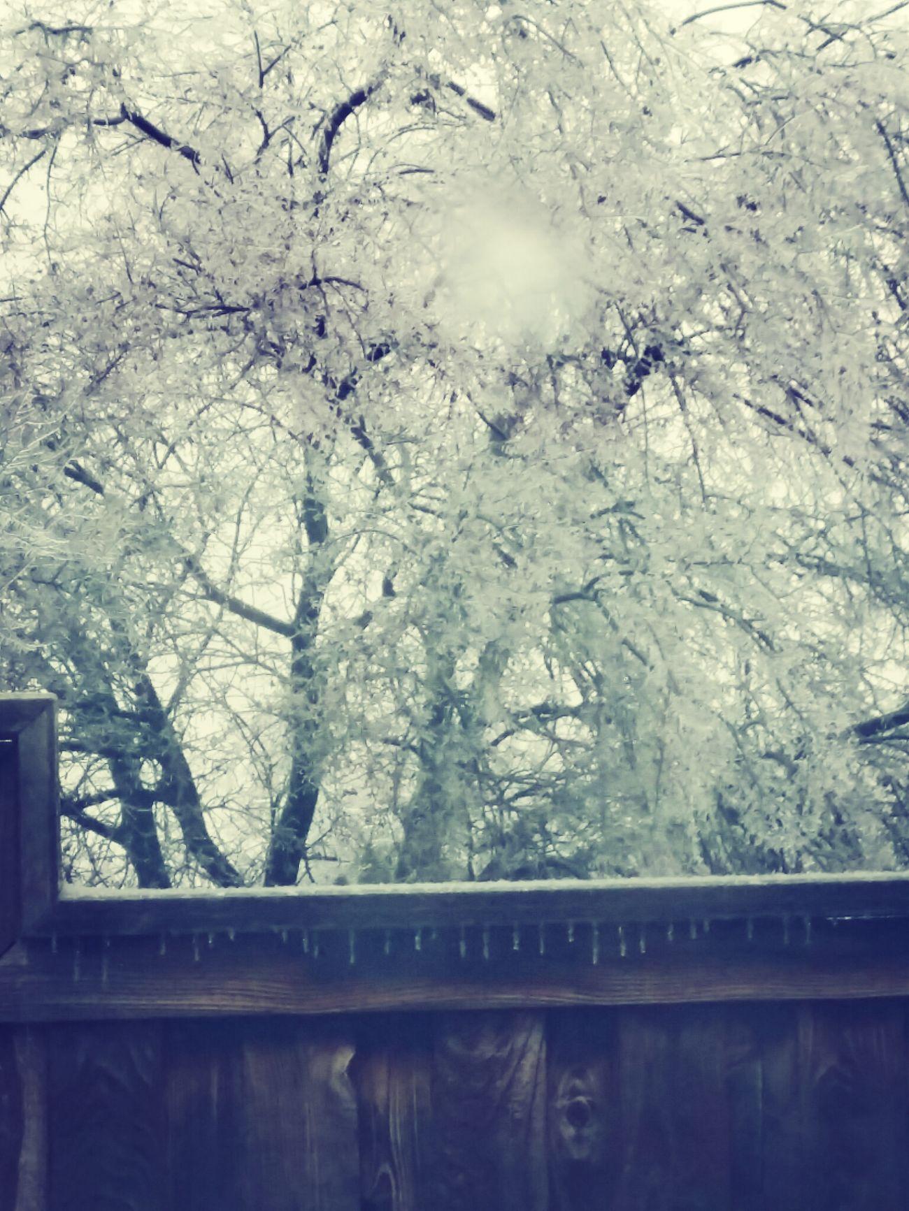 árboles cristalizados se ven hermosos ♧