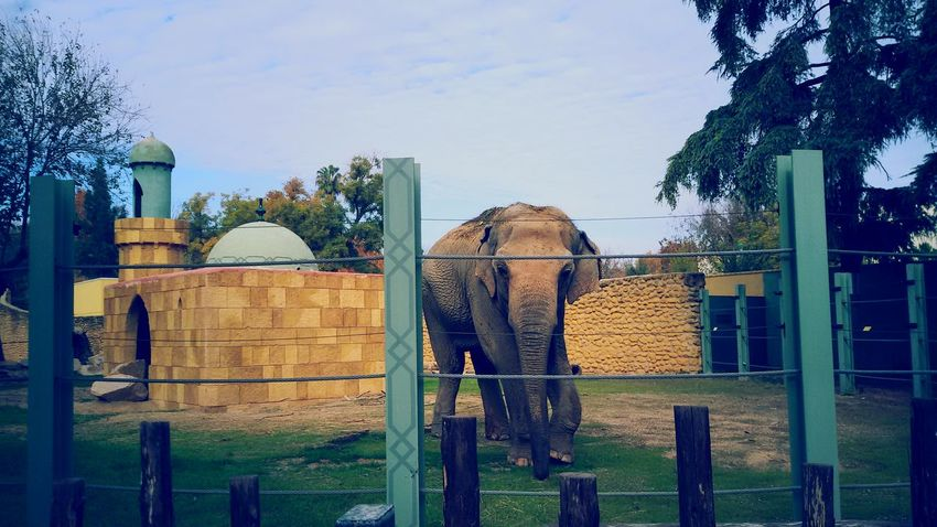 In the zoo of cordoba