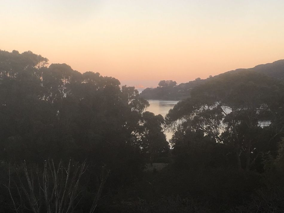 Nature Sunset Scenics Beauty In Nature Tree Outdoors Water Sea Sky No People Landscape Mountain Day Tiburon  Sanfrancisco SanFranciscoBay California