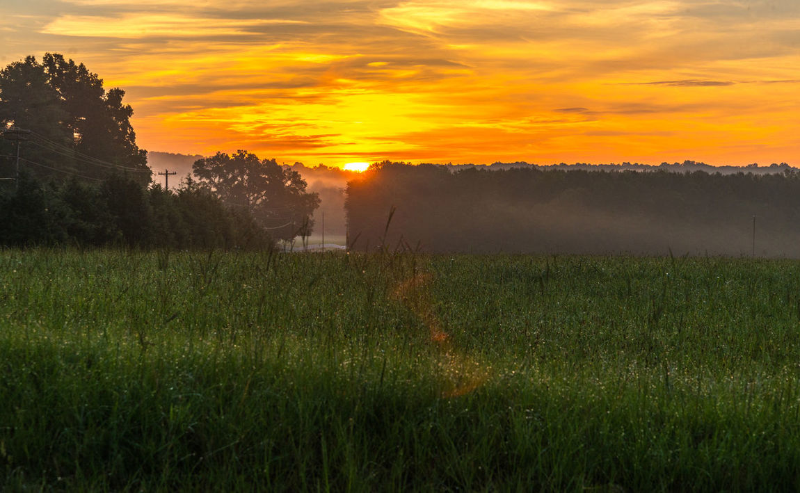 Countryside sunrise! Beauty In Nature Country Countryside Field Grass Growth Landscape Landscape_photography Landscapes Nature Nikonphotography No People Orange Color Outdoors Rural Scene Scenics Sky Sun Sunrise Tranquil Scene Tranquility