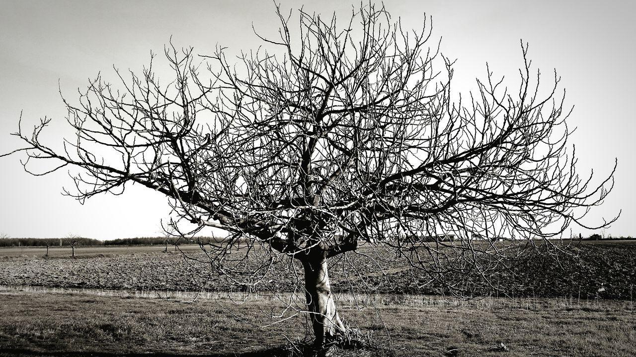 Le donne sono alberi, pronte a vincere molti inverni, pazienti, belle in ogni stagione. Tree Of Life Sleeping Souls Outdoors Biking Trails First Eyeem Photo Tree Womenpower She Is International Women's Day 8 Marzo