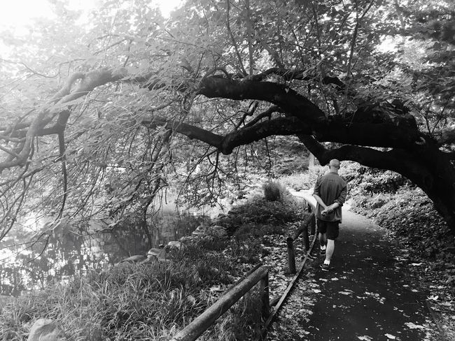 Back To Nature Nature Japanese Garden Prospect Park Brooklyn New York City Calm Botanical Gardens Trees Park Black And White Peaceful Urban Escape Monochrome Monochrome Photography