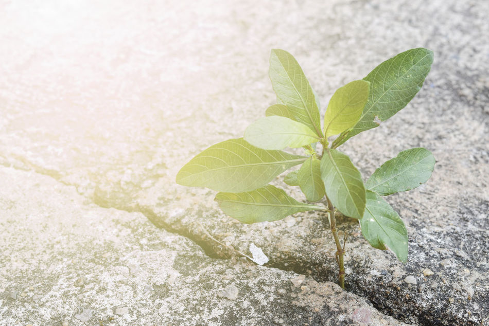 Beauty Beauty In Nature Close-up Day Fragility Freshness Green Color Growth Leaf Nature No People Outdoors Plant Summer