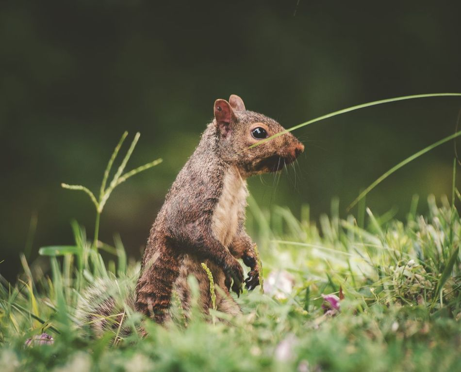 Squirrel. Nature Animals Taking Photos Nikon Photography Nature_collection Nature Photography Naturelovers Bokeh Relaxing Nikon D5100  Warm