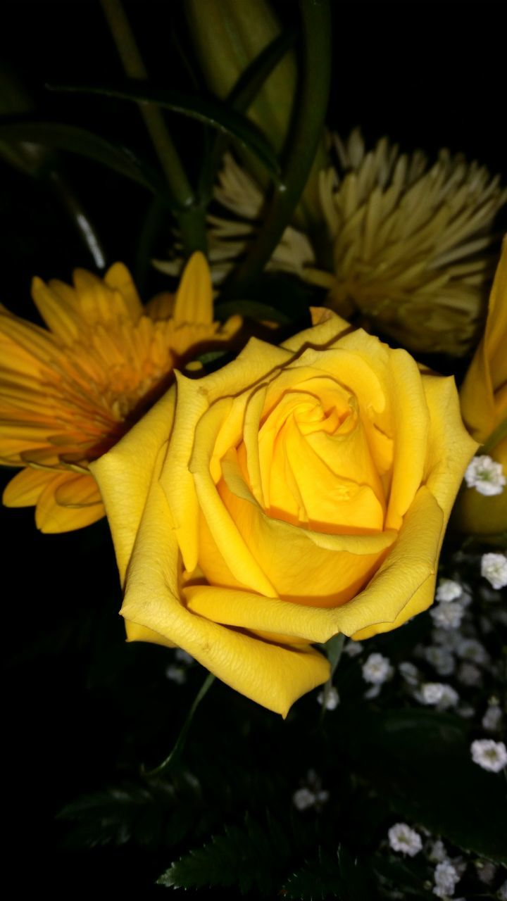 flower, petal, yellow, fragility, nature, flower head, freshness, beauty in nature, plant, blossom, no people, growth, rose - flower, close-up, springtime, blooming, outdoors, day