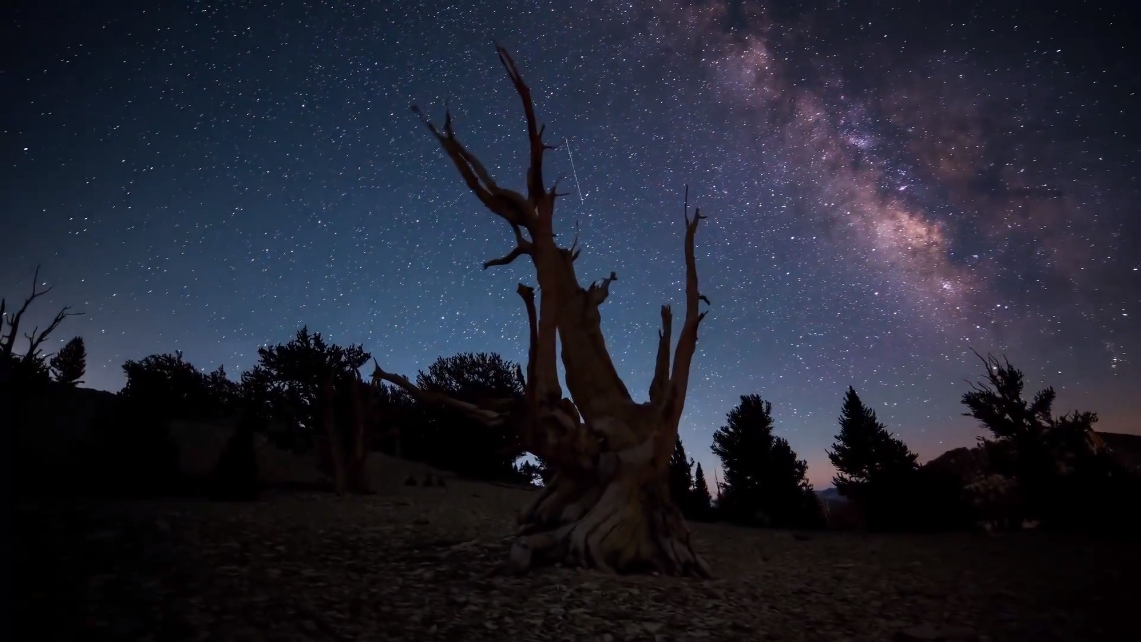 night, tree, sky, low angle view, silhouette, dark, star - space, illuminated, tranquility, bare tree, star field, tranquil scene, nature, scenics, outdoors, no people, branch, beauty in nature, tree trunk, astronomy