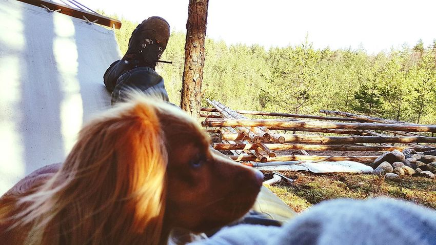 Taking a break with my dog while building a campsite in the woods. Campsite Sweden Wildlife & Nature Outdoors Campfire Sweden-landscape Happy Dog Taking A Break Relaxing In The Forrest