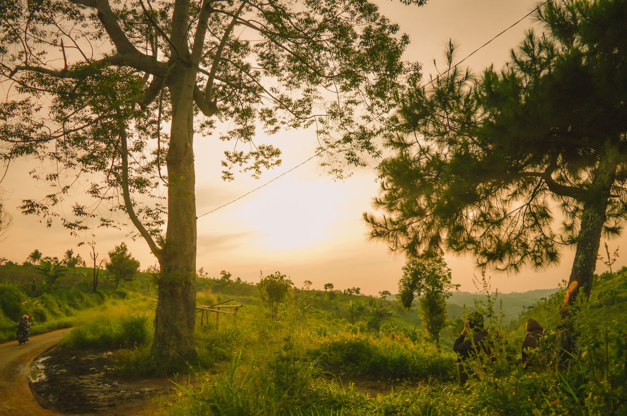 Tree Sunset Nature Landscape Beauty In Nature Scenics Sky Outdoors Mountain No People Tranquil Scene Tranquility Freshness Close-up Landscapes Outdoor First Eyeem Photo The Great Outdoors - 2017 EyeEm Awards Travel Tranquility
