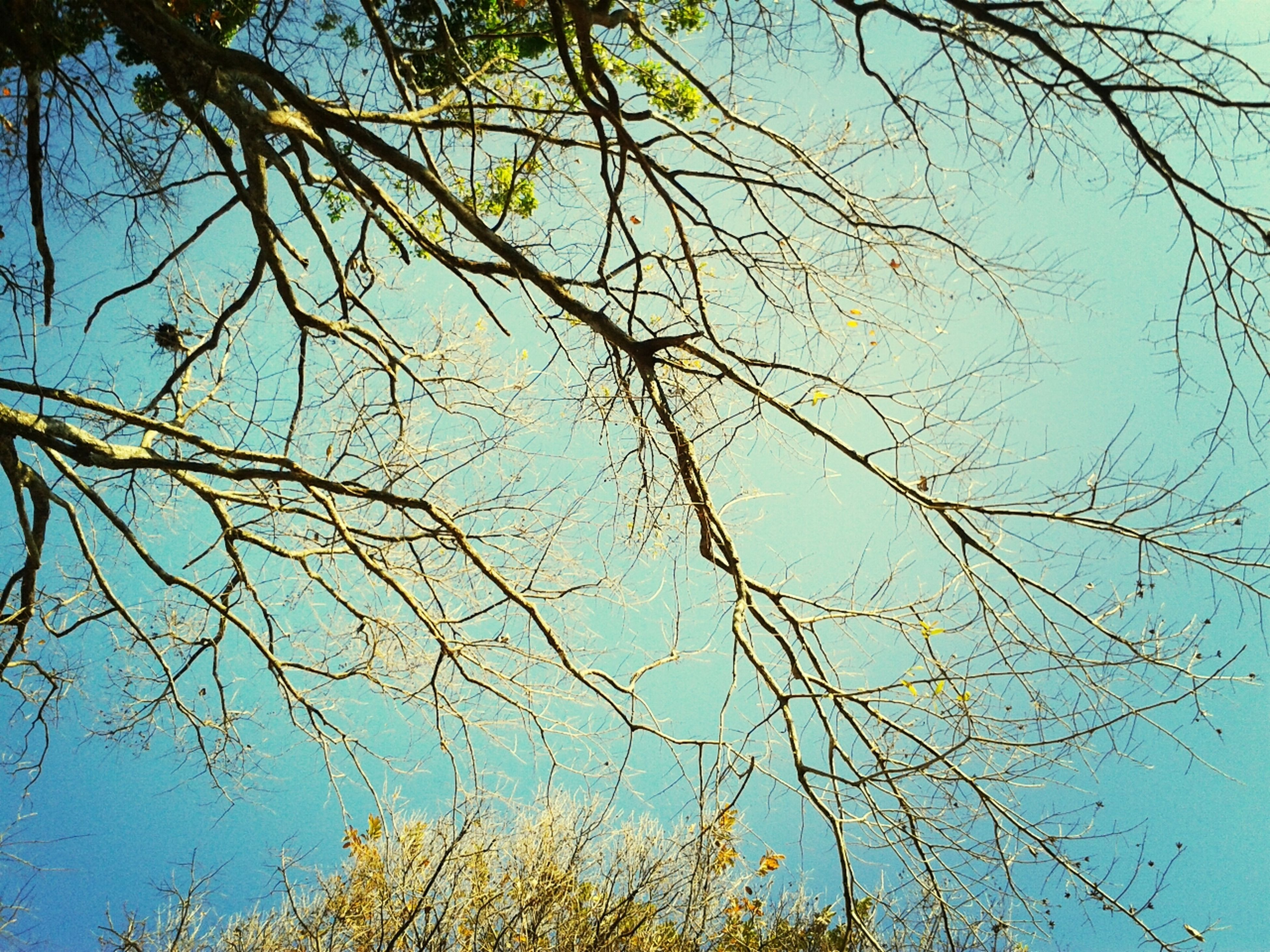 branch, low angle view, tree, clear sky, blue, bare tree, nature, tranquility, growth, beauty in nature, sky, outdoors, day, scenics, no people, high section, tree trunk, sunlight, autumn, tranquil scene