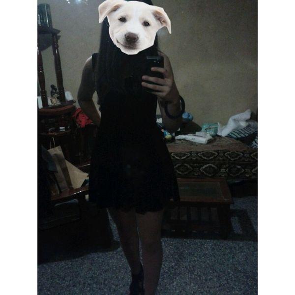 Guau Dog Girl