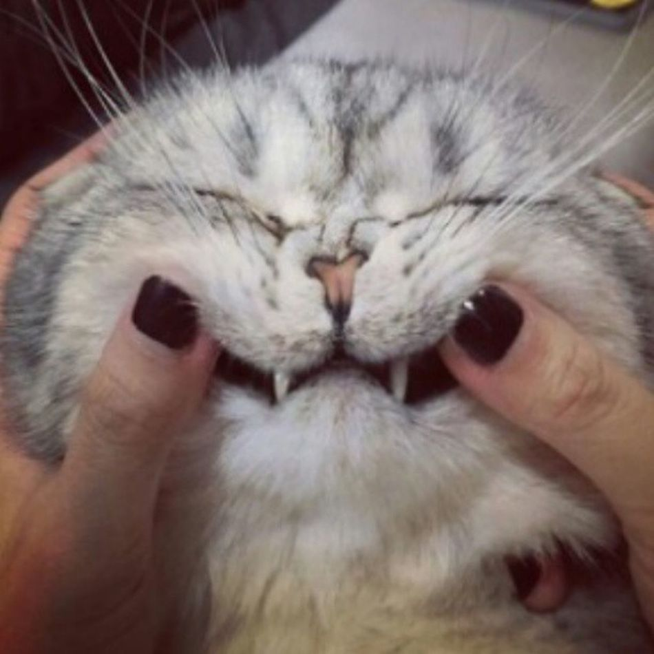 Keep calm and smile. Have a nice day! Rokuthecat @rokuthecat Picoftheday Smile Cat keepcalm
