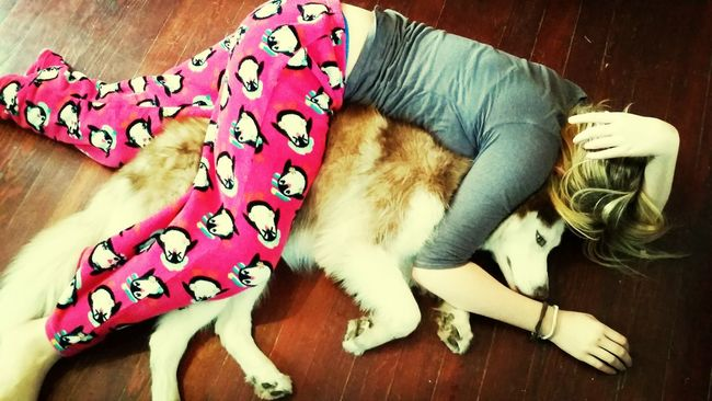 One of us took a nap instead of helping prepare our Thanksgiving dinner.... SnuggleBuddies Husky ♡ Nap Time