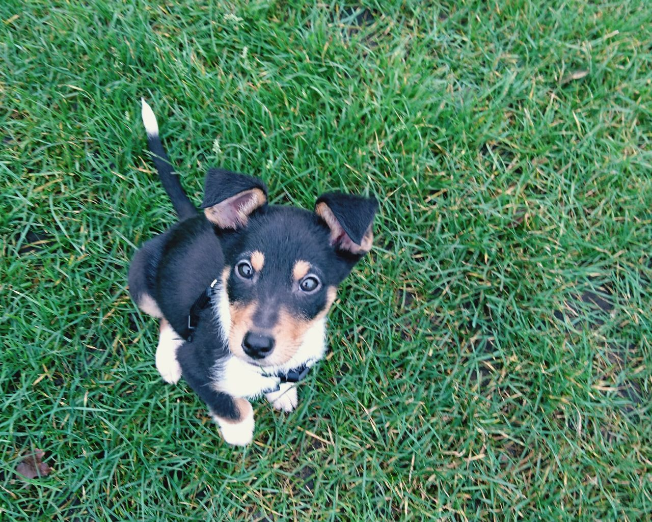 Dog Dog Love New Buddy❤ Austrailiansheperdmix Roef!!