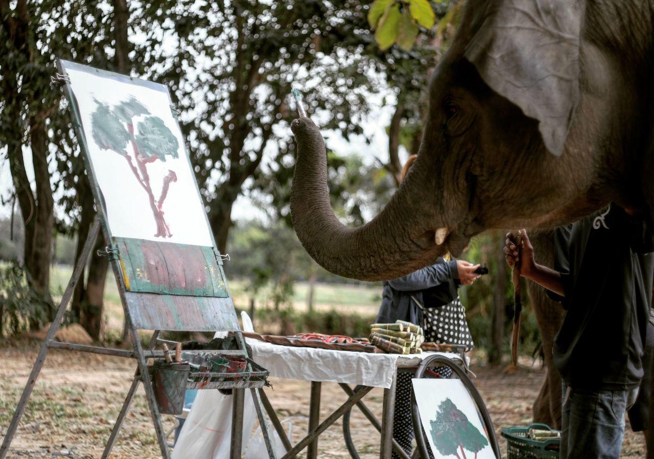Beautiful stock photos of elefant,  Animal Body Part,  Animal Head,  Animal Themes,  Animal Trunk