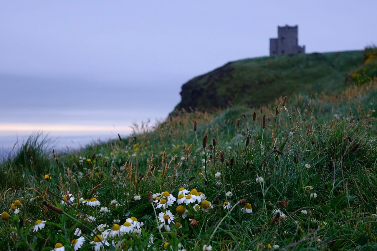 Beautiful stock photos of ireland, Beauty In Nature, Blooming, Blue, Built Structure