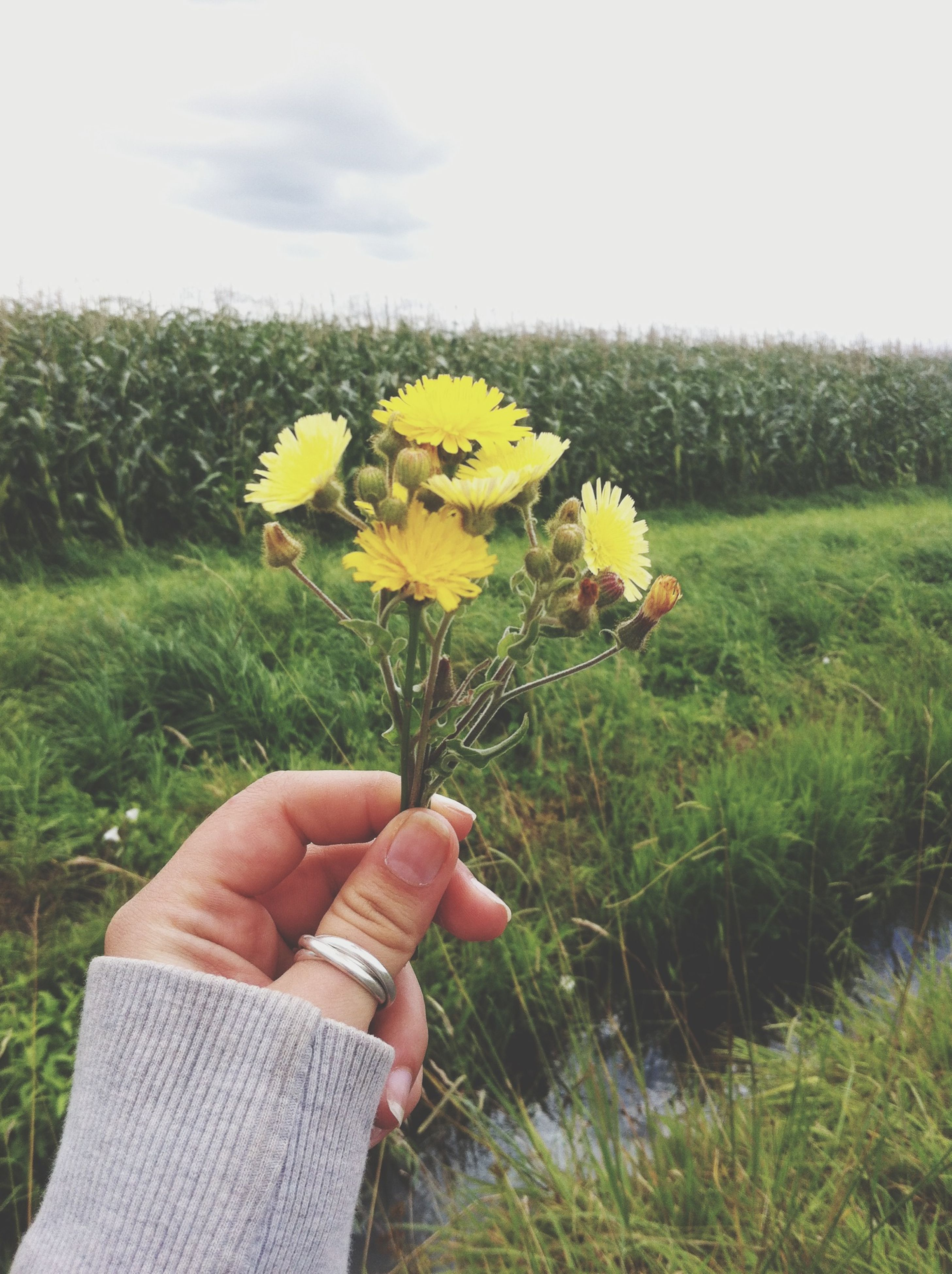 flower, person, holding, freshness, fragility, yellow, field, leisure activity, lifestyles, beauty in nature, growth, flower head, part of, plant, unrecognizable person, petal, nature