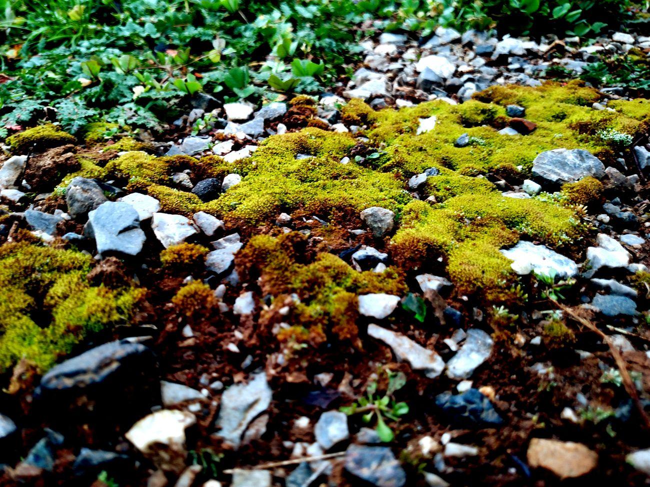 Moss Rocks Random