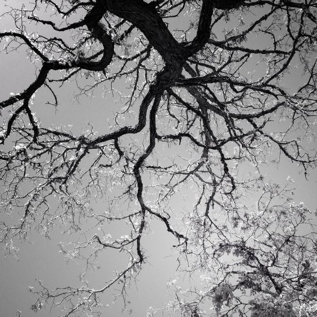 Nature Blackandwhite AMPt_community EyeEm Best Shots