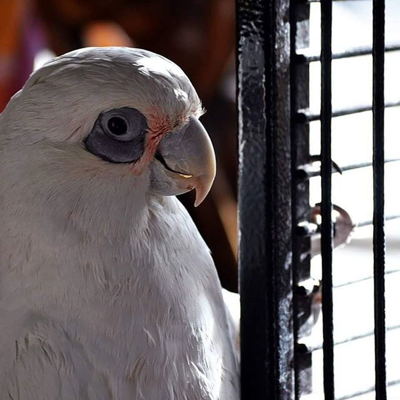 bird, beak, close-up, animal head, focus on foreground, looking at camera, portrait, bird of prey, animal themes, day, trapped, beauty in nature, no people, nature, outdoors, mammal