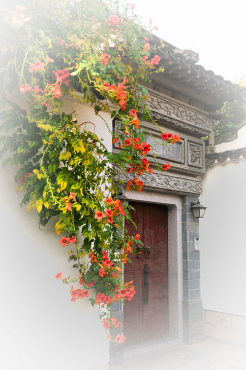 Red Tradition No People Flower Plant Outdoors Architecture Blossom Time🌺