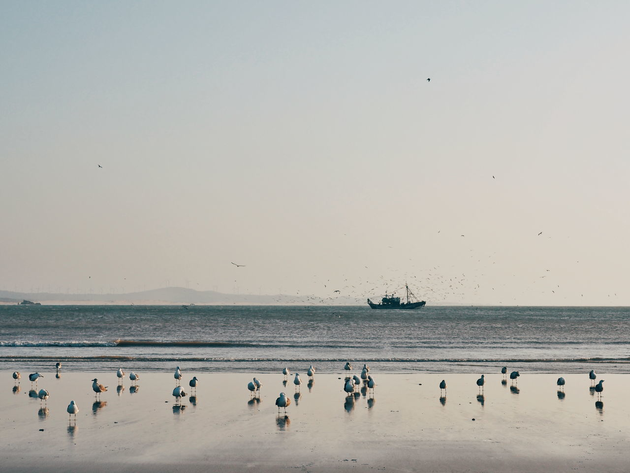 Flying Beach Sea Bird Animal Wildlife Animals In The Wild Large Group Of Animals Nature Sunset Scenics Flock Of Birds Outdoors Water Sand Beauty In Nature Animal Themes Sky Seagull Travel Destinations Essaouira Morocco Morocco 🇲🇦 Coastline Trawler Fishing Boat